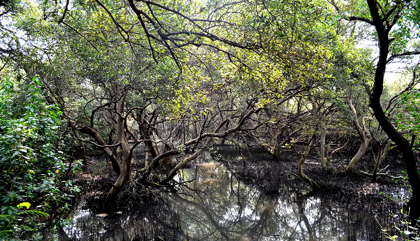 Mangroves - Mumbai's Green Lifelines